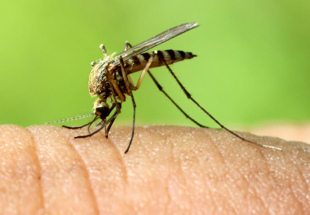 Nobelpris för nya läkemedel mot parasitsjukdomar