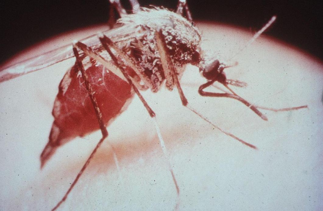 WHO: Snabba åtgärder krävs för att stoppa resistens mot malariamedel