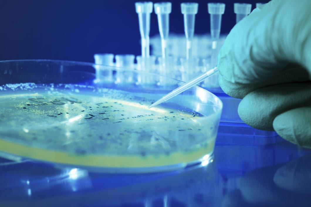 Celler förändras snabbt vid odling i laboratorium