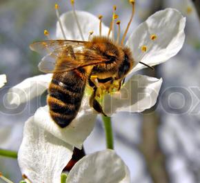 Honung bryter ner mrsa-bakterier