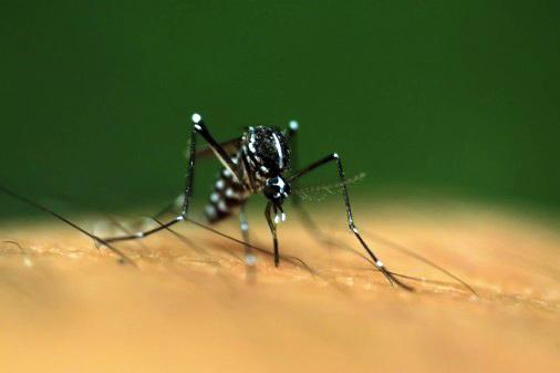 Myggburet virus ökar risken för missfall