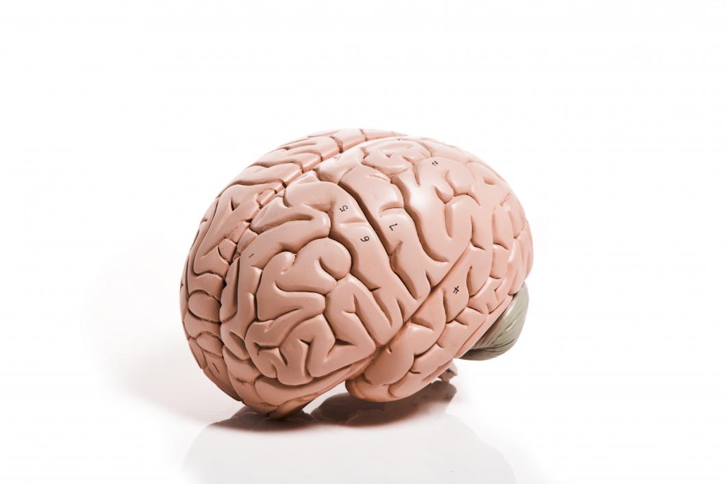 Hjärnan vässas av rikt informationsflöde