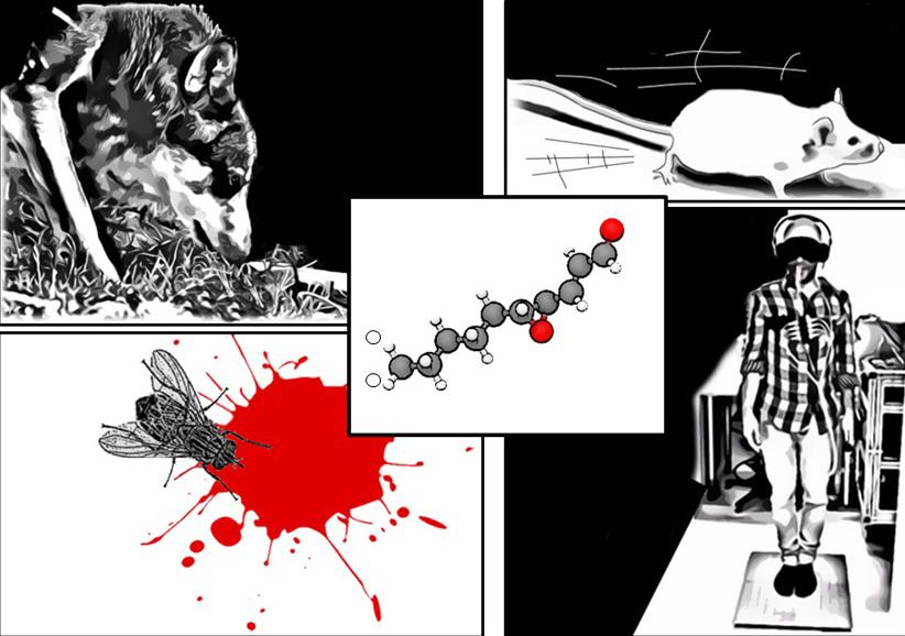 Blodmolekyl lockar vargen menfår människan att rygga