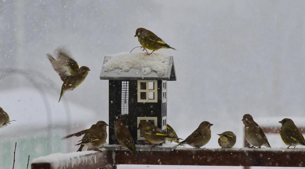 Svår lunginflammation efter närkontakt med fåglar