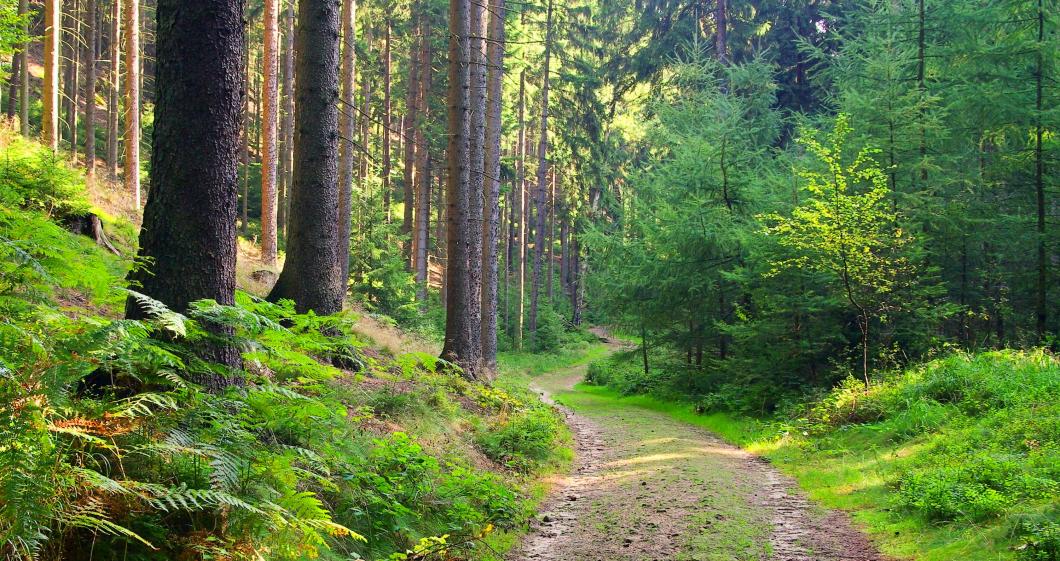 Naturen borde utnyttjas mer i vården