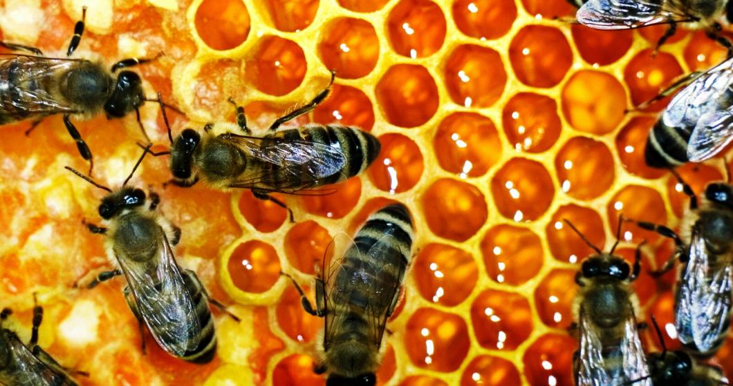 Honungskrig mellan USA och svenska forskare