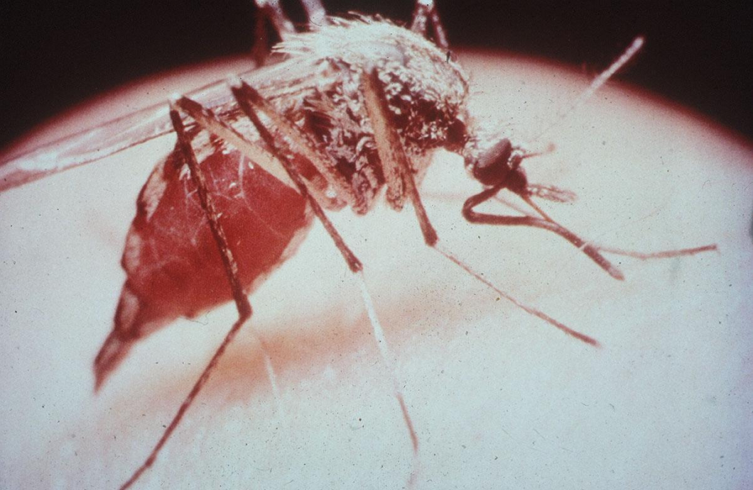 Grönt ljus för världens första malariavaccin