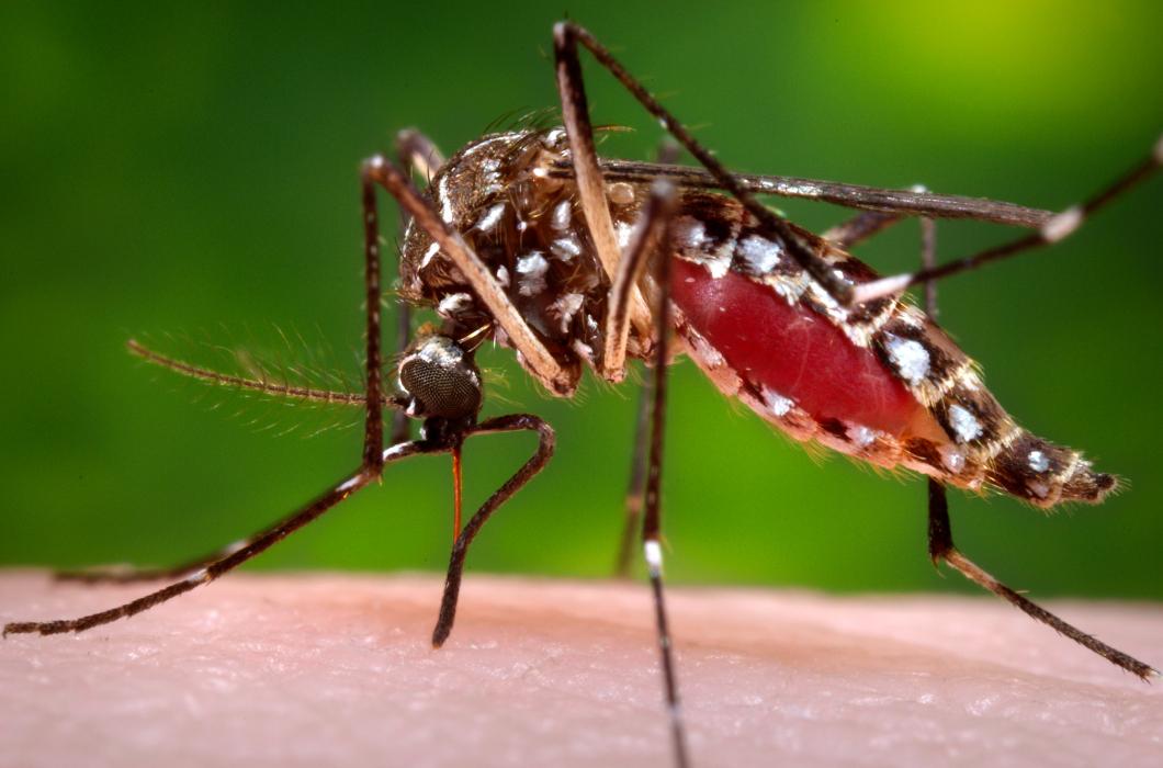Zikavirus misstänks kunna orsaka förlamning