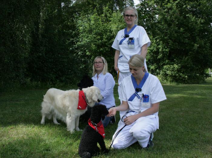 Lyckat projekt med hundar inom den rättspsykiatriska vården