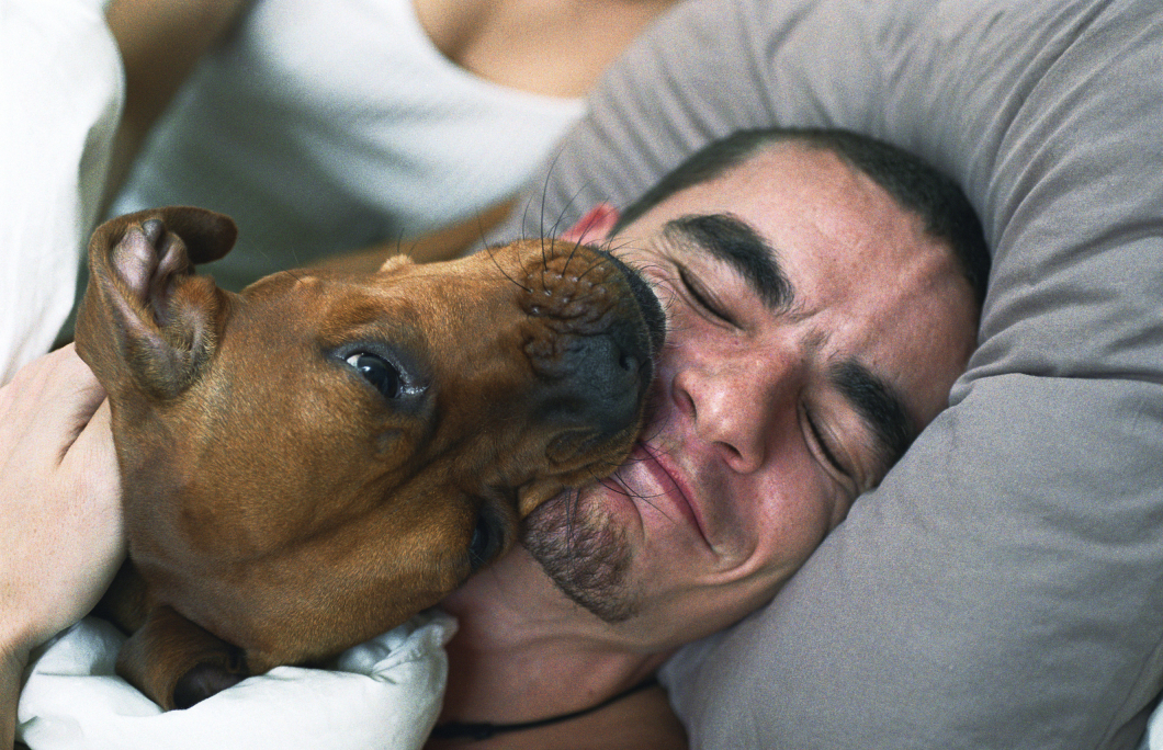 Individuella riskanalyser krävs för hundar i vården